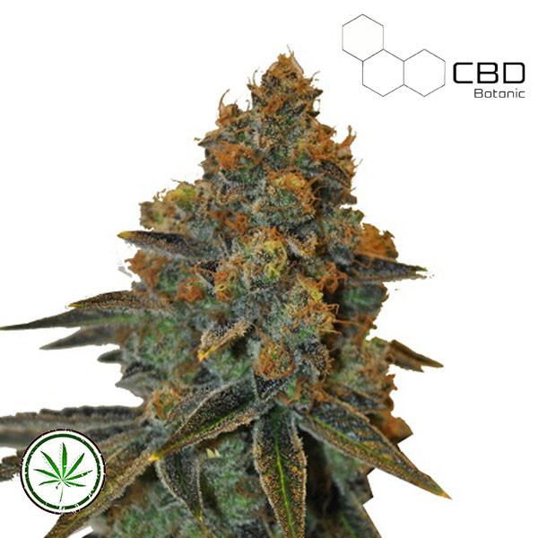 CBD D. Diesel