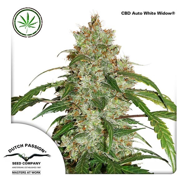 CBD Auto White Widow