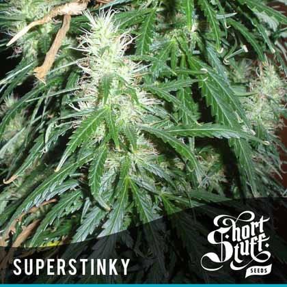 Auto Super Stinky
