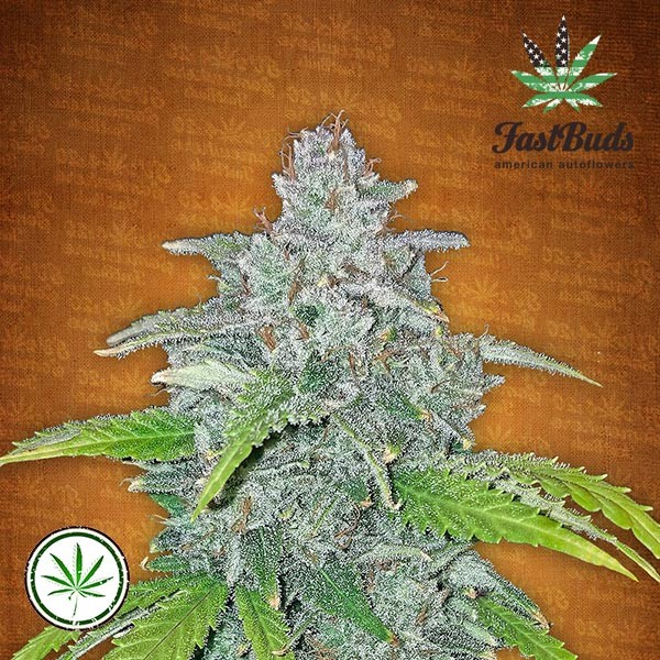 Blue Dream Matic Auto