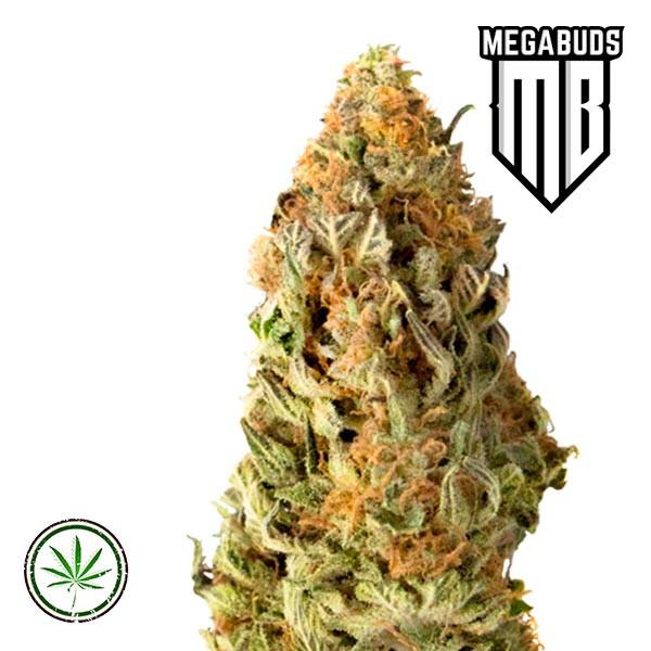 Mega CBD