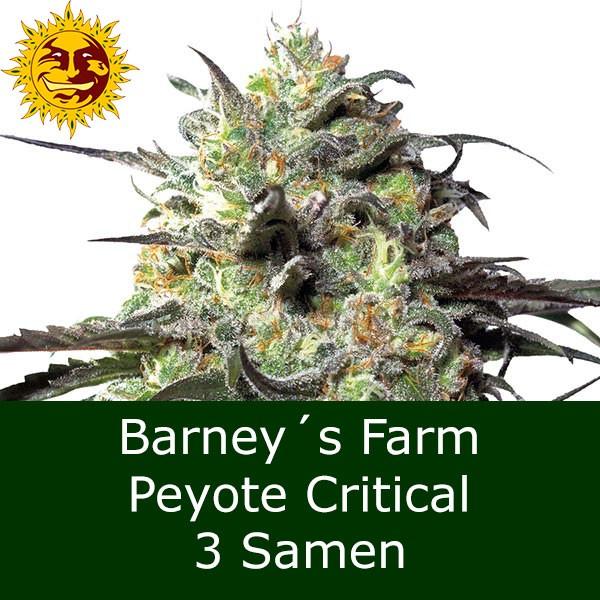 3 Seeds Peyote Critical - BF Bonus
