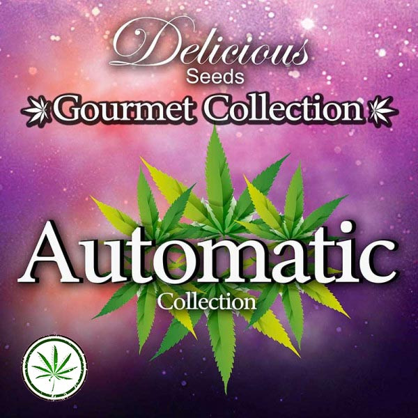 Gourmet Collection Automatic 1