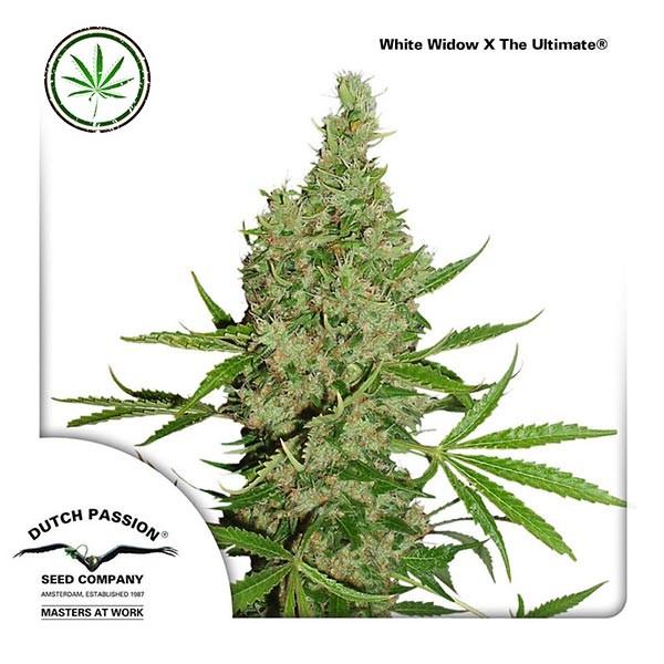 White Widow x The Ultimate reg