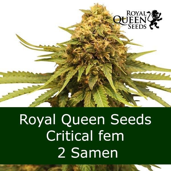 2 Seeds Critical fem - RQS Bonus
