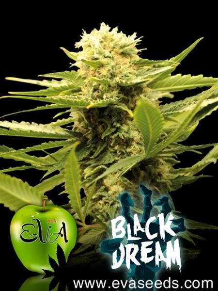 Black Dream fem