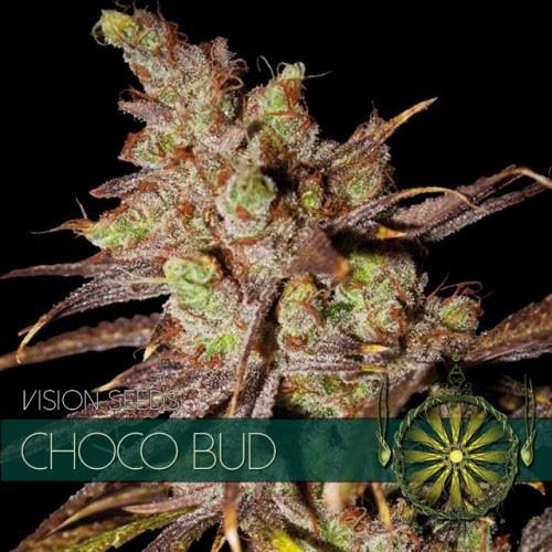 Choco Bud fem before Chocoloco