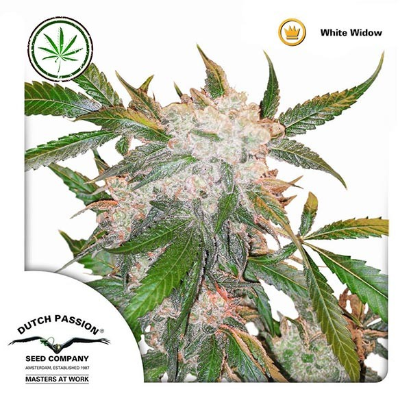 White Widow reg